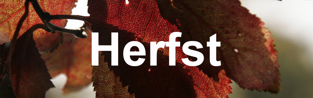 Herfst banner 2